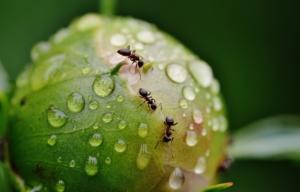 Pasti na hmyz