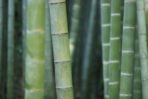 Bambusové vlákna