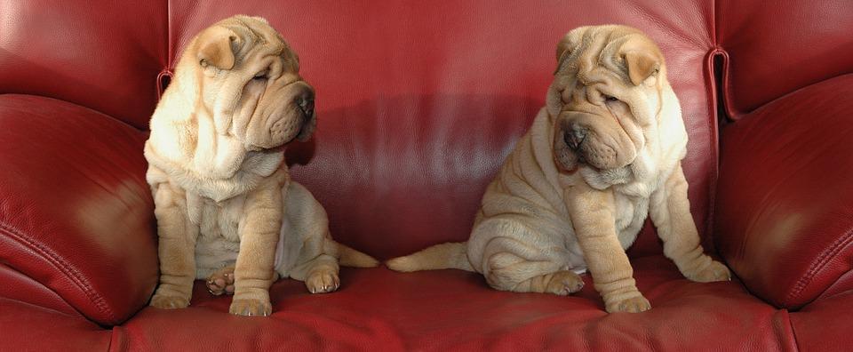 Psi na sedací soupravě