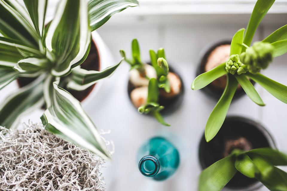 Jak na zahradu v bytě