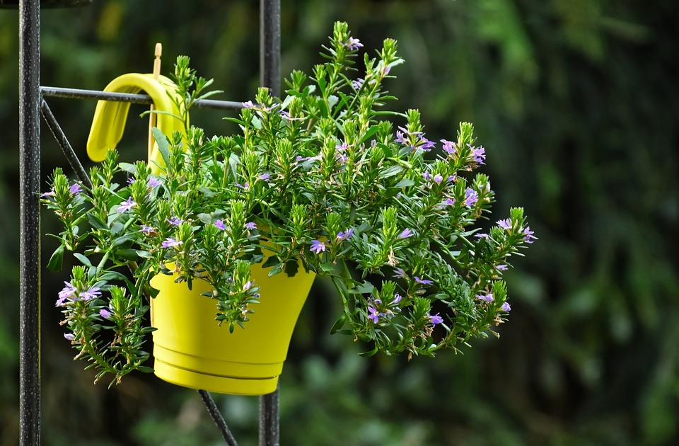 Pěstování květin na balkóně