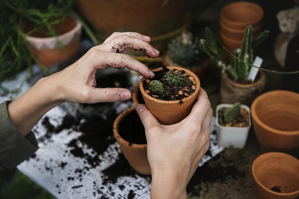 Vytvoření zahrady v bytě