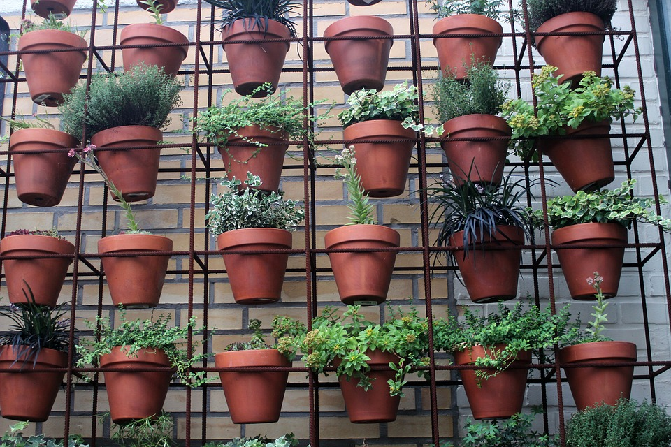 Zahrada v bytě