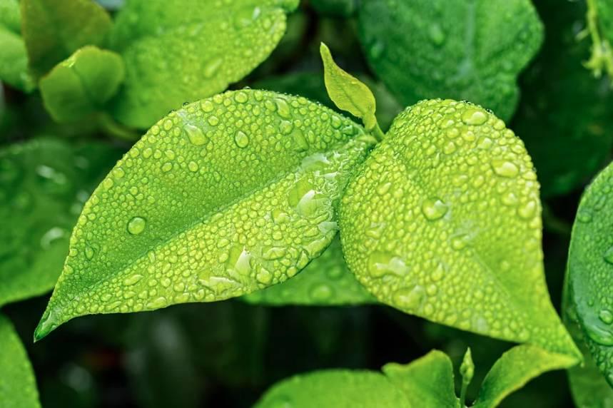 Ekologická domácnost pomáhá chránit přírodu i ušetřit