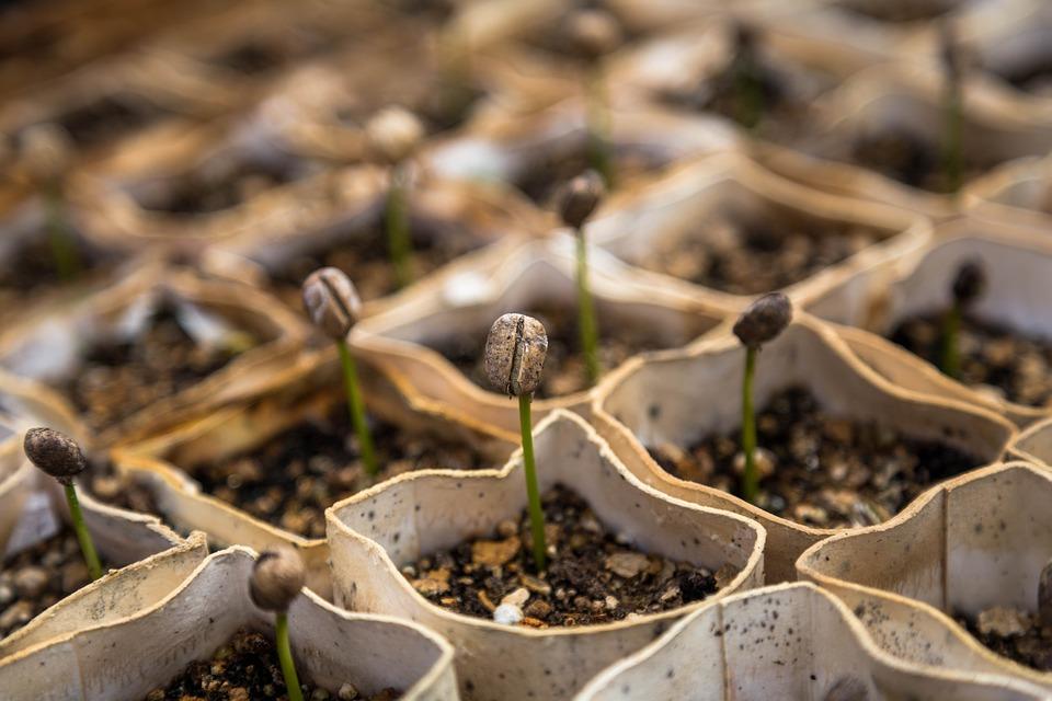 Doma vypěstovaná bylinka