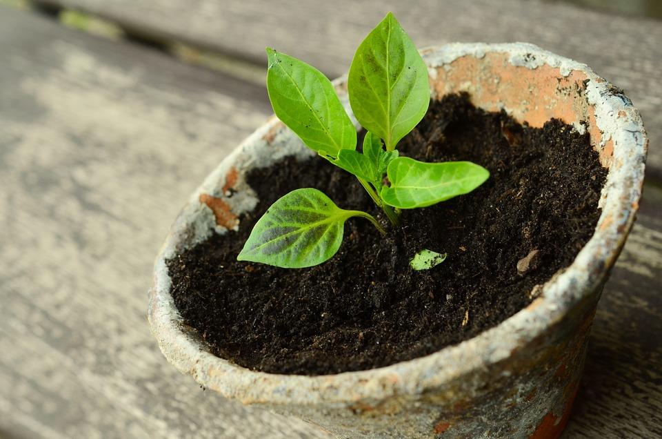 Malá rostlinka vypěstovaná v bytě
